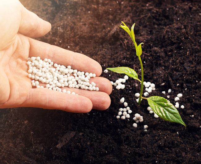 Seeds, fertilizers and pesticides